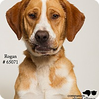 Adopt A Pet :: Rogan - Baton Rouge, LA