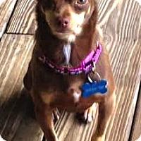 Adopt A Pet :: Callie - Murfreesboro, NC