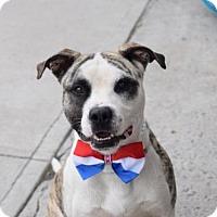 Adopt A Pet :: Osirus - Ridgefield, CT