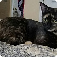 Adopt A Pet :: Sweet little Willow - Charlotte, NC