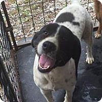 Adopt A Pet :: Zoey - Rexford, NY