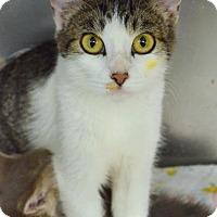 Adopt A Pet :: Alexa - Newberg, OR
