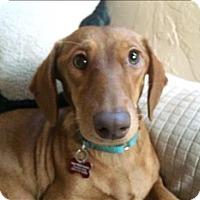 Adopt A Pet :: Gemma - Encino, CA