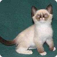 Adopt A Pet :: *MALINKI - Hanford, CA