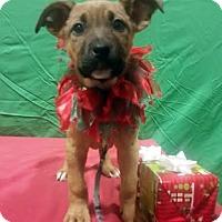 Adopt A Pet :: Snowflake-Adopted! - Detroit, MI