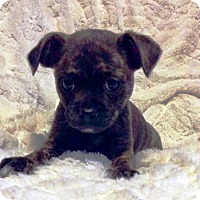 Adopt A Pet :: I'M ADOPTED Stripes Anchor - Oswego, IL