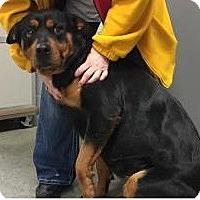 Adopt A Pet :: Adira - Paducah, KY