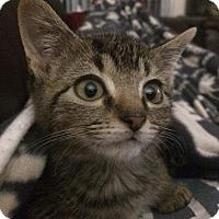 Adopt A Pet :: James - Columbus, OH