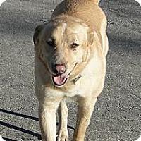 Adopt A Pet :: Duke - Columbus, IN