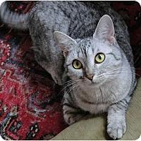 Adopt A Pet :: Fern - Chicago, IL