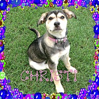 Adopt A Pet :: Christi - Houston, TX