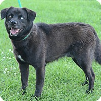 Adopt A Pet :: Blue - Charlemont, MA