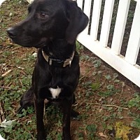 Adopt A Pet :: Cinder - Millersville, MD