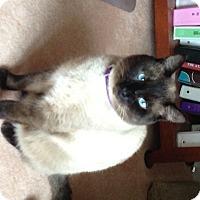 Adopt A Pet :: Dudley - Pinckney, MI
