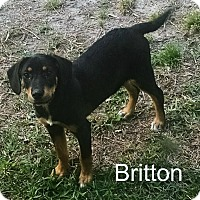 Adopt A Pet :: Britton in CT - Manchester, CT