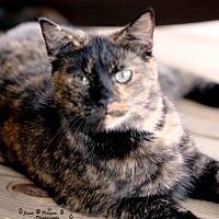 Adopt A Pet :: Tamara - Transfer, PA