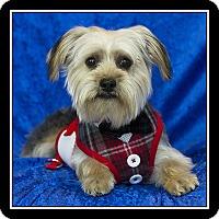 Adopt A Pet :: Buttons - San Diego, CA