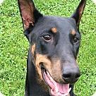 Adopt A Pet :: Yumi