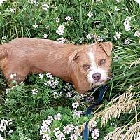 Adopt A Pet :: Fancy - Geneseo, IL
