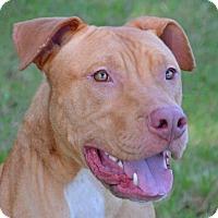 Adopt A Pet :: Nero - Englewood, FL