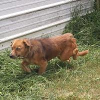 Adopt A Pet :: Athena - Columbia, KY
