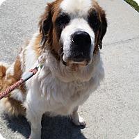 Adopt A Pet :: Sadie - Norwood, GA