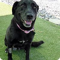 Adopt A Pet :: Martina - Purcellville, VA