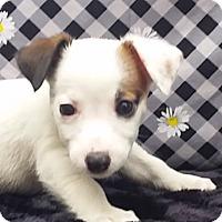 Adopt A Pet :: Jemma - East Sparta, OH