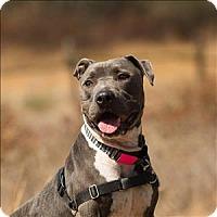 Adopt A Pet :: Chuko - Escondido, CA