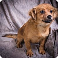 Adopt A Pet :: TRUDY - Anna, IL