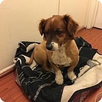 Adopt A Pet :: TANNER - Pasadena, CA