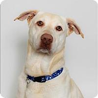 Adopt A Pet :: Kocoum - San Luis Obispo, CA