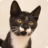 Adopt A Pet :: Nemo - Colorado Springs, CO