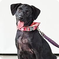 Adopt A Pet :: Jasmine - Victoria, BC