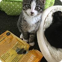 Adopt A Pet :: Noel - Barnegat, NJ