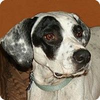 Adopt A Pet :: Katherine Hepburn - Adelphi, MD