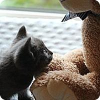 Adopt A Pet :: Leland - Chicago, IL