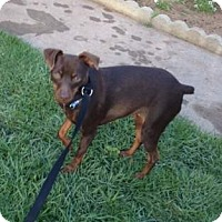 Adopt A Pet :: Jasmine - Oceanside, CA