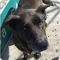 Adopt A Pet :: Peggy Sue - Fowler, CA