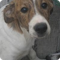 Adopt A Pet :: Shaw*ADOPTED!* - Chicago, IL