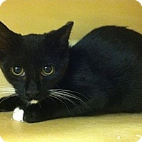 Adopt A Pet :: Panda - Monroe, GA