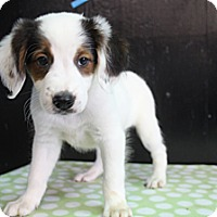 Adopt A Pet :: Onyx - Hamburg, PA