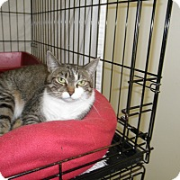 Adopt A Pet :: Arainia - Milwaukee, WI