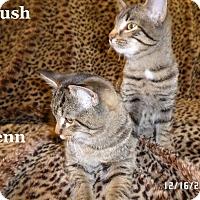 Adopt A Pet :: Rush - Bentonville, AR