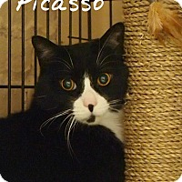 Adopt A Pet :: Picasso - Ocean City, NJ