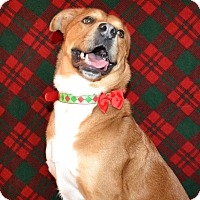 Retriever (Unknown Type)/Chow Chow Mix Dog for adoption in East Smithfield, Pennsylvania - Anton (Sponsored)
