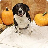 Adopt A Pet :: Sissy - Ogden, UT