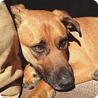 Adopt A Pet :: Woody - Long Beach, NY