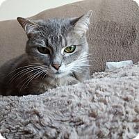 Adopt A Pet :: Enya - St. Louis, MO