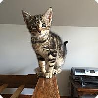 Adopt A Pet :: Denton - Portland, ME
